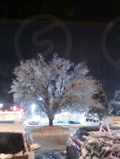 Ice laden Tree photo