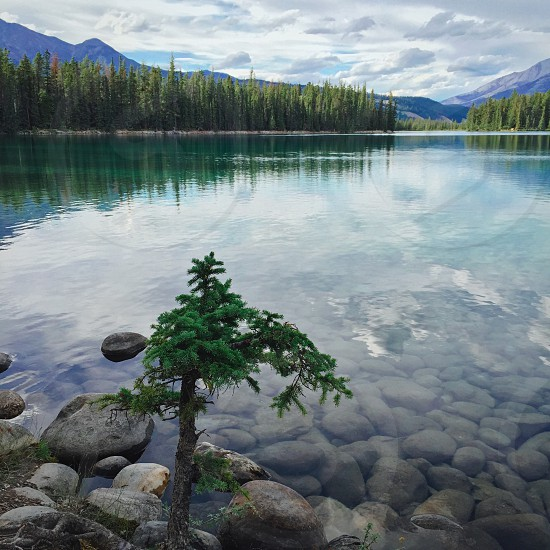 Jasper National Park AB Canada Beauvert Lake Tree clear Water Landscape Mountain Nature Adventure Explore Reflection photo