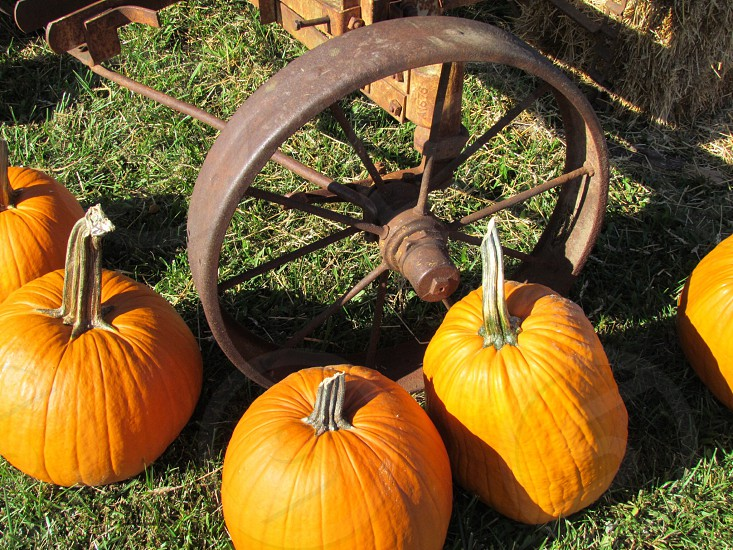 Fall decorations around rusty antique wheel. Pumpkin vintage background wallpaper  photo