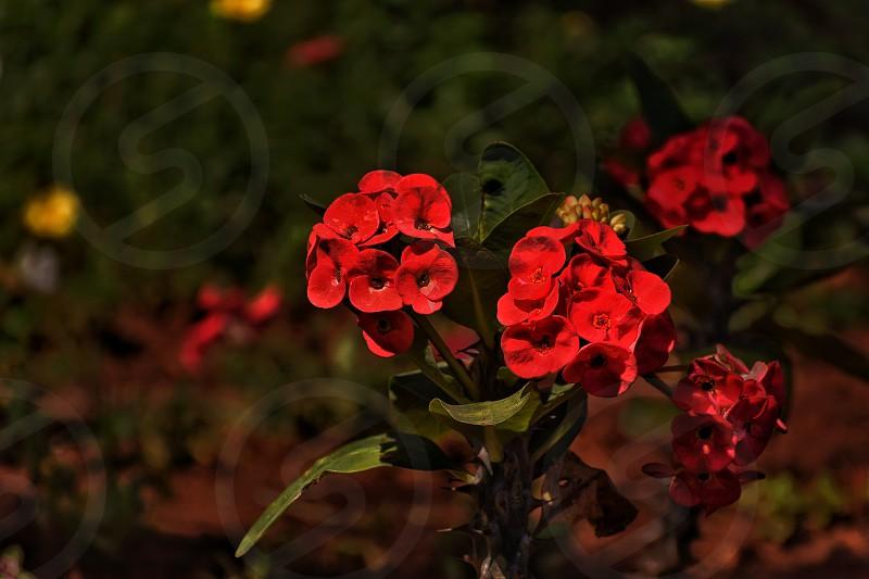 garden nature flower photo