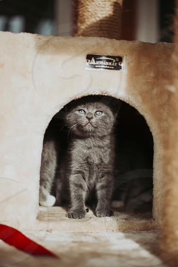 Kittens galor.  photo