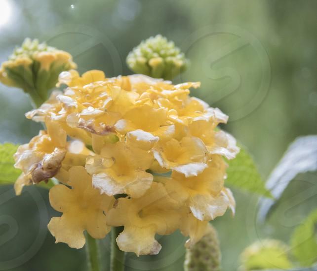 Garden flowers  photo