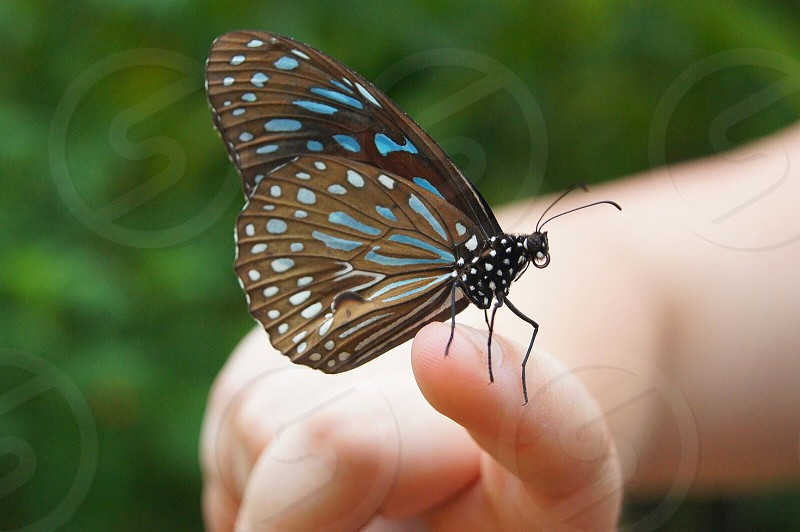 teal and grey butterfly on finger photo