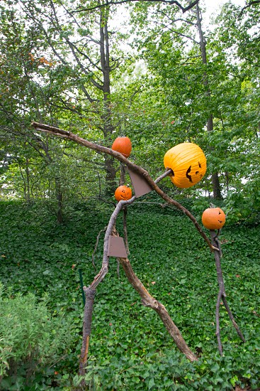 jack-o-lantern with body of twigs standing in the middle of the forest photo