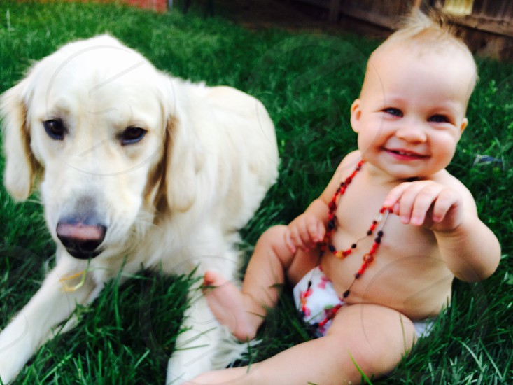 white labrador beside baby photo