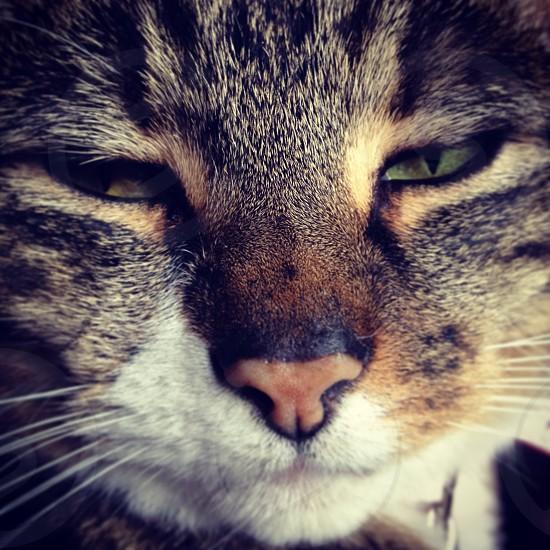 My gorgeous Chloe! Xxx #cat #closeup photo