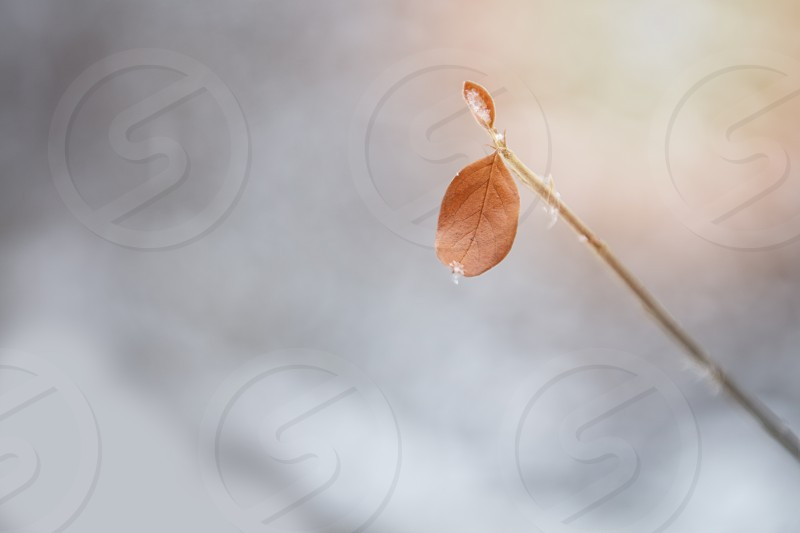 Minimalist photo photo