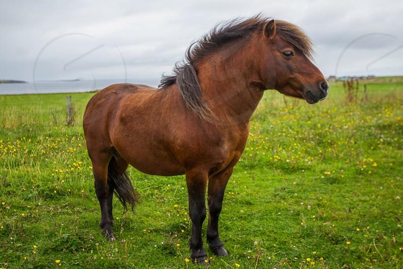 Pony in Scotland photo