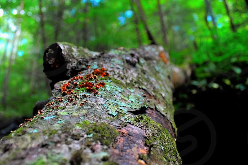 Treevibrantcolorsspringmicro photo