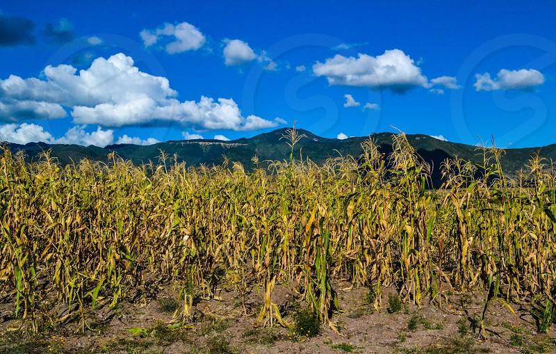 Local corn field in Oaxaca Mexico photo