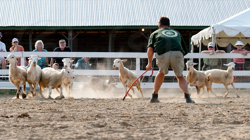 Sheep Dog trials at the Windsor Fair. Windsor Maine. photo