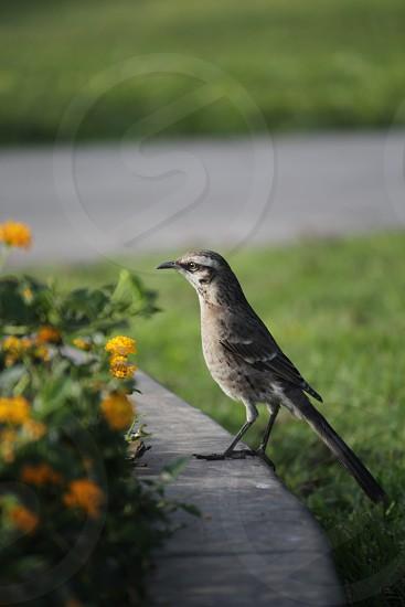 Bird overlooking flowers.  photo