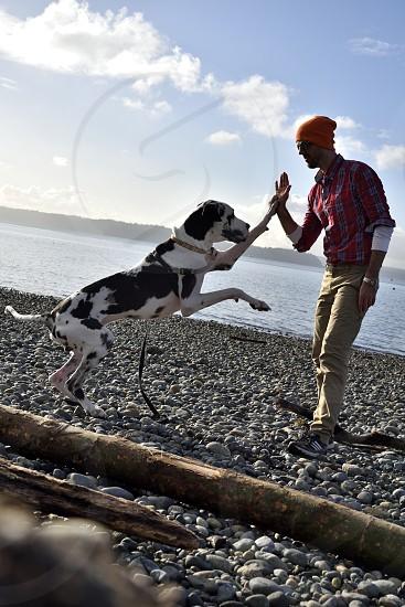 Companionship man dog high-five. photo