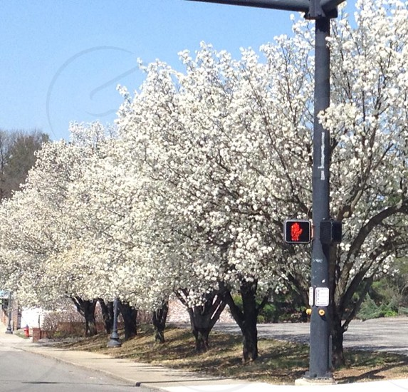 Welcome spring Cookeville Tennessee photo