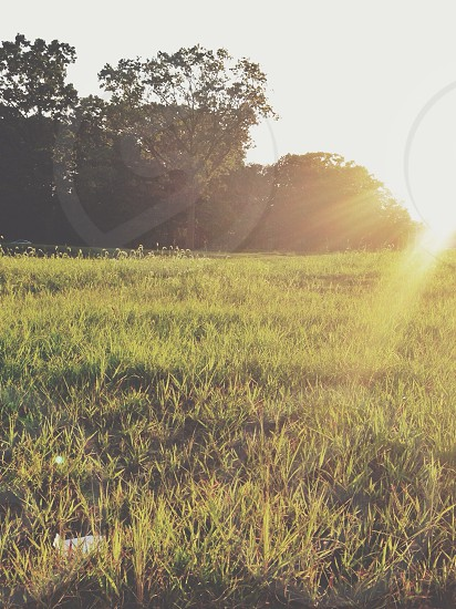 Grassland.  photo