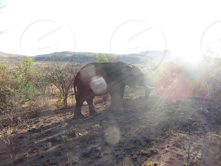 Elephant! photo