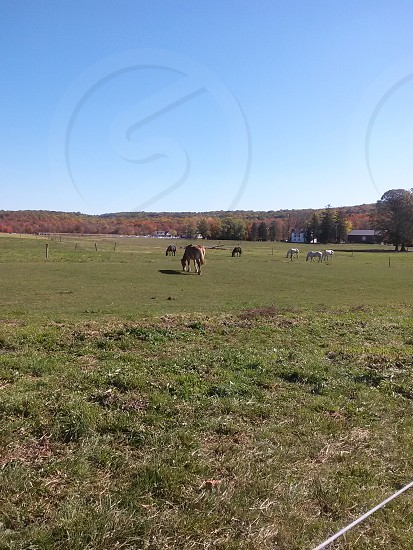 brown and white horses on green grass field during day with clear skies photo