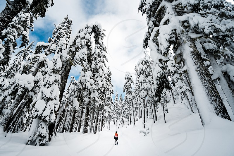 Snowshoe snow forest woods mountain explore snowshoeing snowing trees evergreen pnw Oregon pacific north west photo
