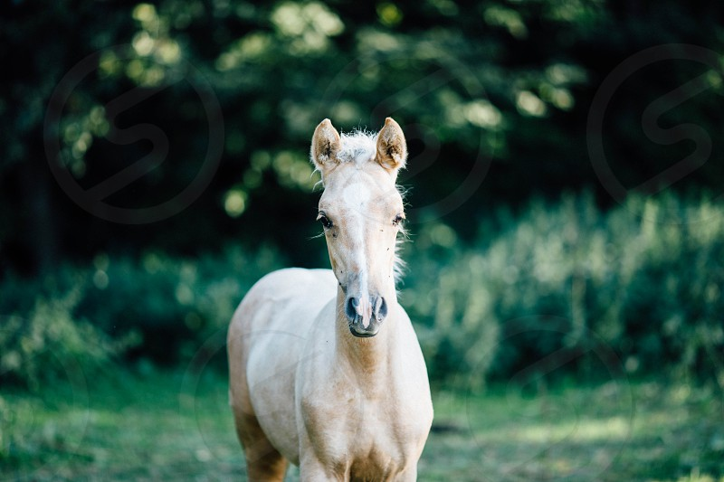 White horse standing in forest photo