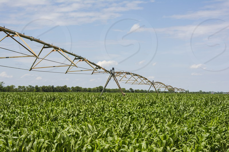 Corn field in early summer with irrigation system in triangular shapes. photo