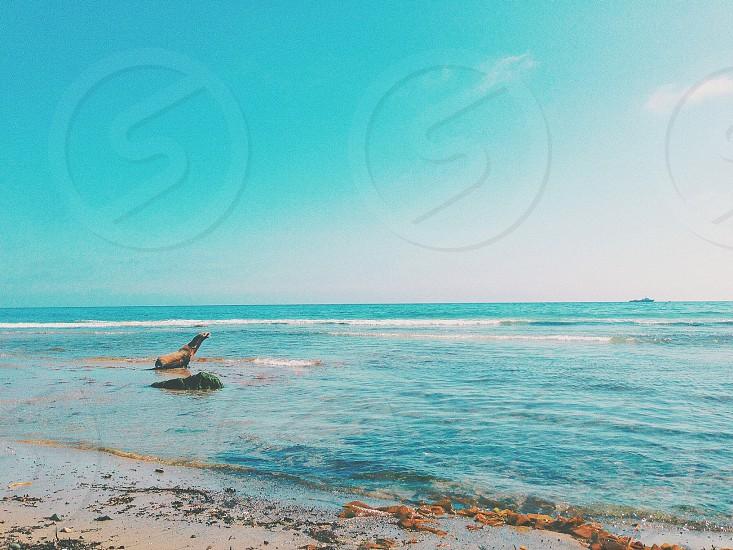 seal beach ocean water sky photo