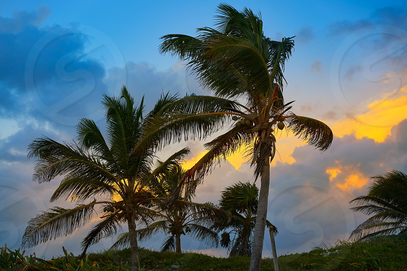 Caribbean sunset palm trees in Riviera Maya of Mayan Mexico photo