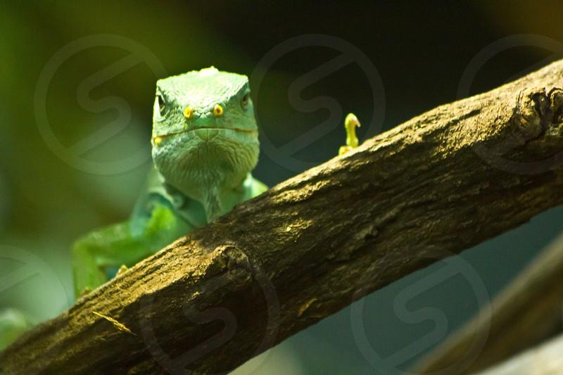 Gecko face zoo branch photo