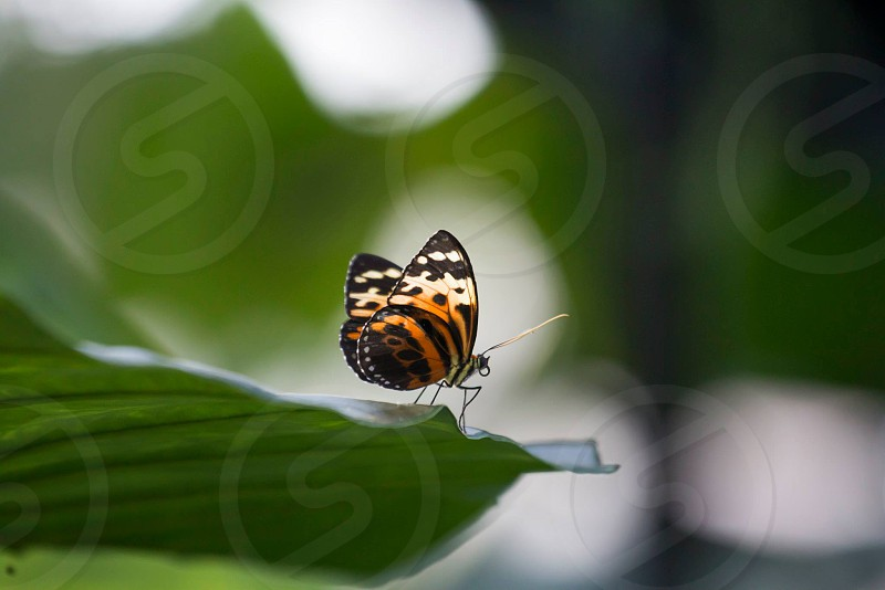 Butterflies in garden photo