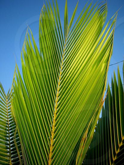 Palm Sunday photo