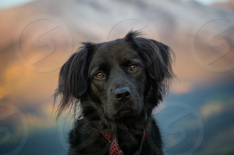 Black Dog Outdoor Portrait photo
