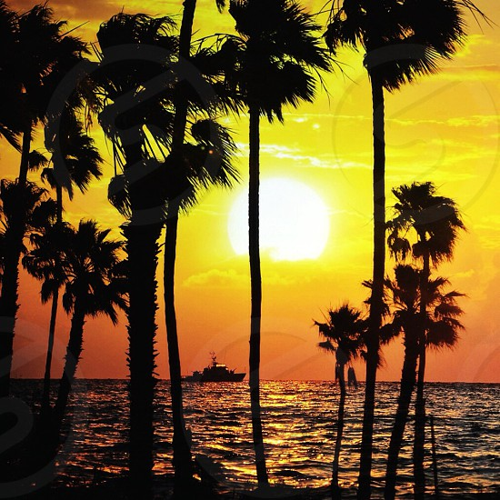 coconut palm tree near ocean over sunset view photo