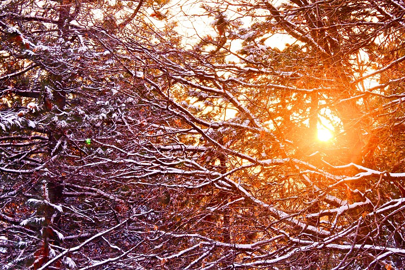 Snow winter snowing sunset orange amazing sunsets trees forest seasons travel explore nature layers perspectives branches natural beauty god heaven dream peace sacred happy photo