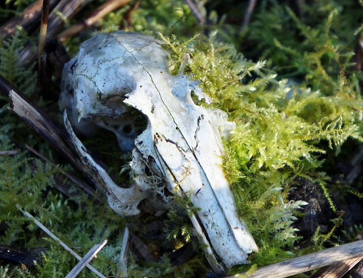 photo of white skull of animal near green grass photo