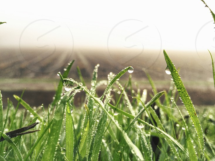 dew drops on green grass blades overlooking brown farm plot at sunrise photo