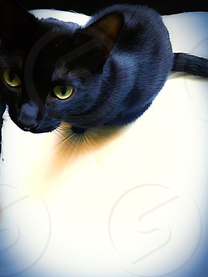 Rye the cat photo