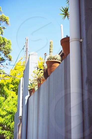 cactus summer sunshine plants backyard sydney photo