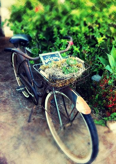 Cafe Stella Santa Barbara CA photo