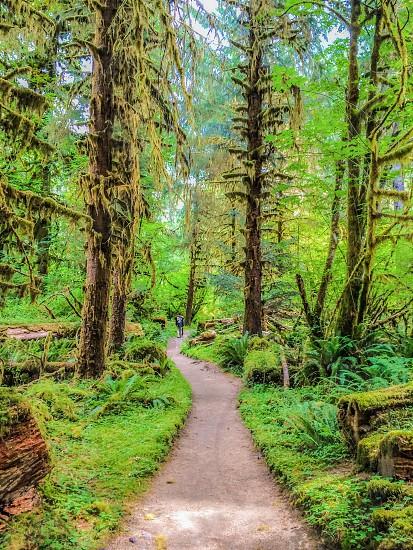 Hoh rainforest washington state trail hike moss green trees grass ferns olympic peninsula path explore lush forest wilderness photo