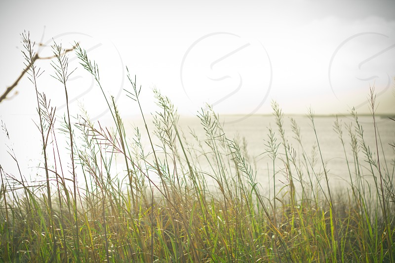 photo of green grass near body of water photo
