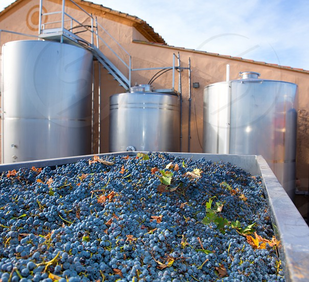 cabernet sauvignon winemaking with grapes and Fermentation stainless steel tanks vessels photo