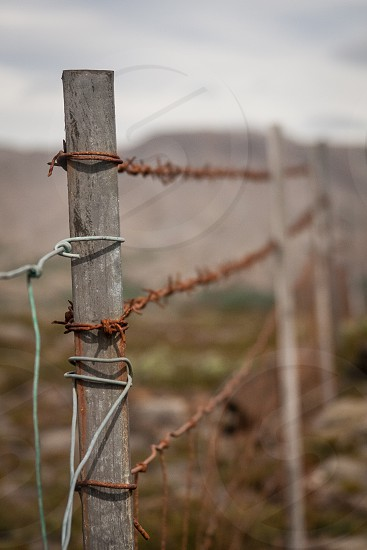 The elements aren't often kind in Iceland as evidenced by this rusting barbed wire fence. photo