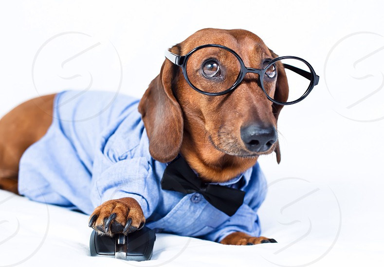 Cute dog in glasses smart cool stylish funny joy happy work pet computer mouse sweet dress  photo