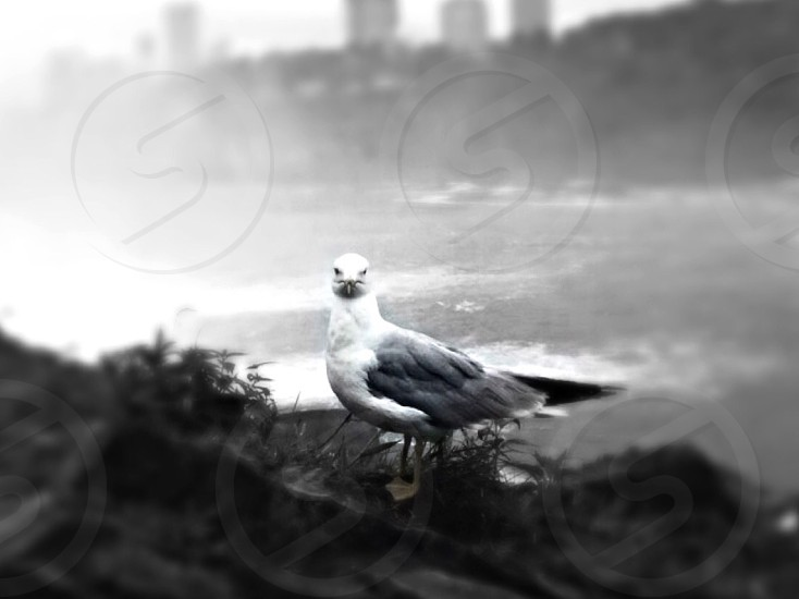 greyscale photo of bird near body of water photo