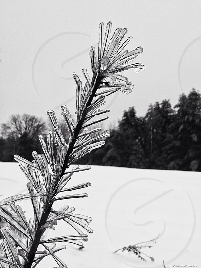 snow covered plant photo