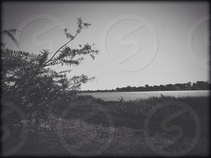 This is a black and white of a serene lake.  photo