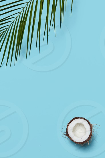 Composition of ripe halves organic coconut and green palm leaf on a blue background with space for text. Creative layout. Flat lay photo