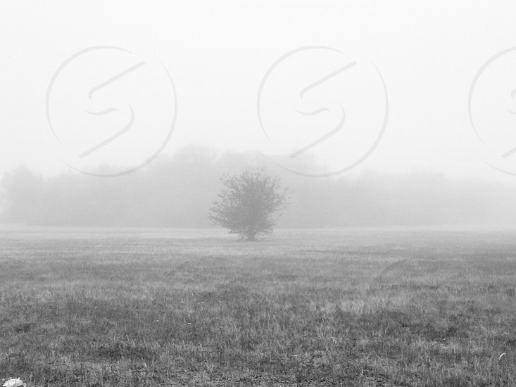 Fog field photo