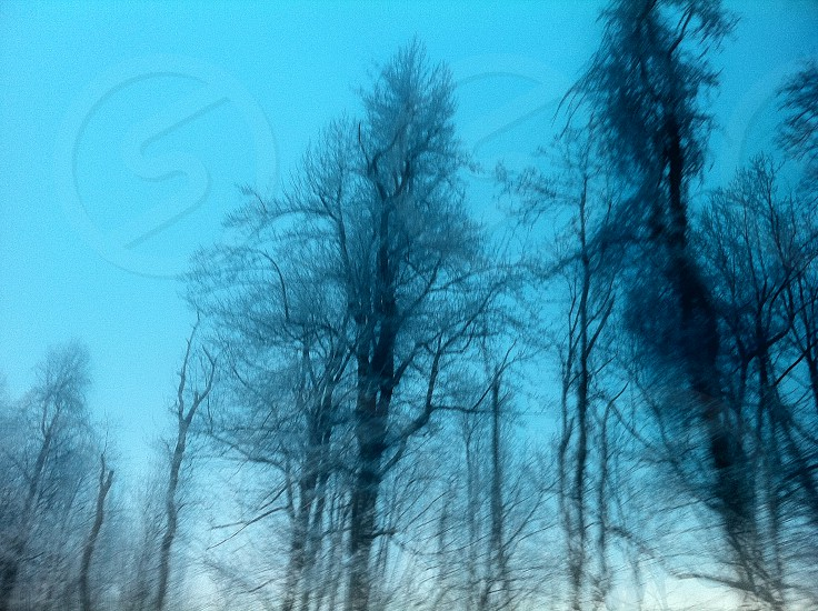 low angle photo bare tree under blue sky during daytime photo