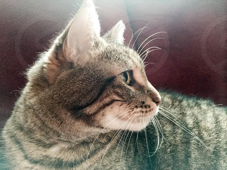 Cat pet nap photo
