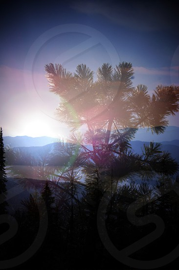 palm plant photo